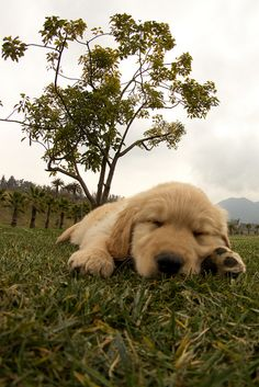 Puppy nap time in the park.