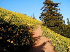 Dog Mountain Hike - Hiking in Portland, Oregon and Washington