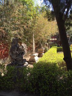 China Trip, China Travel, Sidewalk, Plants, Walkway, Flora, Plant, Walkways, Planting