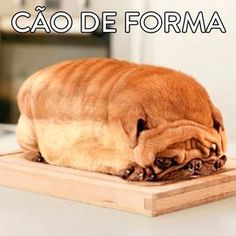 A Pug Loaf - Funny pictures and memes of dogs doing and implying things. If you thought you couldn't possible love dogs anymore, this might prove you wrong. Cute Pugs, Cute Funny Animals, Cute Baby Animals, Funny Dogs, Cute Puppies, Weird Dogs, Funniest Animals, Happy Animals, Animal Pictures For Kids