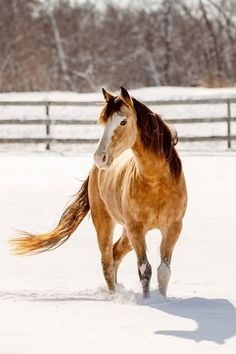 As much as I want to dislike the April snowstorm that is burying us right now I've decided to just go ahead and embrace its beauty and scheduled one. last. winter. photo. shoot. tomorrow.  ps. This horse knows he's somethin' else doesn't he? Fancy! - Photo by Shelley Paulson