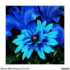 Electric Blue Flowers Poster