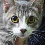 Brooklyn & Staten Island Urgent List | NYC AC&C Urgent Cats
