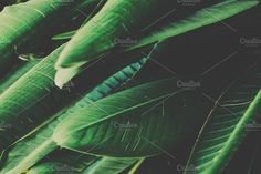 Green Tropical Leaves by Rene Jordaan Photography on Photography For Sale, Business Illustration, Tropical Leaves, Watercolor Cards, Business Card Logo, Nature Photos, Travel Posters, Digital Image, I Shop