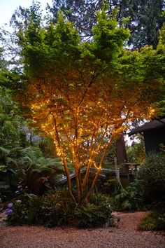 Garden Visit Marni Leis Starry String Lights Tom Kubik ; Gardenista