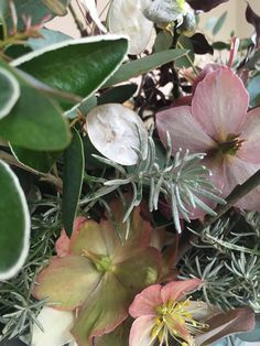 Flowers and foliage available in March at My Flower Patch. Foliage, Plants, Flowers, Flower Patch, Growing