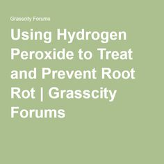 Using Hydrogen Peroxide to Treat and Prevent Root Rot | Grasscity Forums
