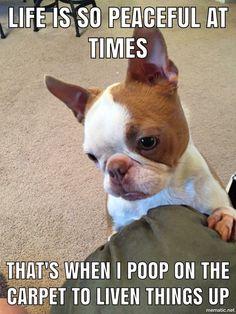 I really think my dog thinks this way. Haha!