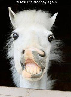 Pony is happy!