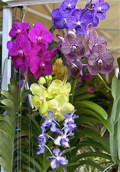 Some beautiful varieties.