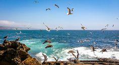 Ericeira 2013 Ericeira Portugal, Luxury Travel, Animals, Animales, Animaux, Animal, Animais