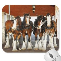 Clydesdale Draft Horses in the Barn Mousepads from http://www.zazzle.com/clydesdale+horse+gifts