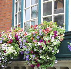 Low maintenance plants, like petunias, are perfect for window boxes. Spring Tips: Window Boxes | Five Star Painting