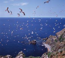 天売島 海鳥ウォッチング