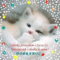 Preschool Quotes, Good Night All, Beautiful Fairies, Cute Pictures, Wish, Humor, Cats, Animals, Album