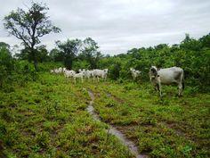 Município de Dueré - Tocantins - Brasil
