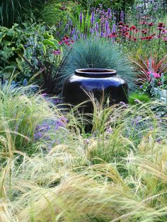 Blue Fescue, cordyline, echinacea, liatris, hostas - all set off beautifully by the black ceramic pot Blue Fescue, Stipa, Ornamental Grasses, Garden Planters, Dream Garden, Belle Photo, Garden Inspiration, Backyard Landscaping, Beautiful Gardens