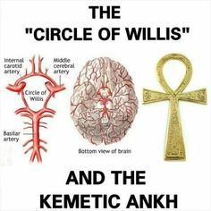 Circle of Willis & Kemetic Ankh - - Circle of Willis & Kemetic Ankh Spiritualität Alchemy Symbols, Egyptian Symbols, Ancient Symbols, Ancient Aliens, Ancient Egypt, Ancient History, Mayan Symbols, Viking Symbols, Viking Runes