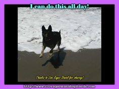 Assisting Your German Shepherd to Get Used to the Water #german_shepherd_photos #german_shepherds #german_shepherd_breed #german_shepherd_pictures #german_shepherd_dog #german_shepherd_behavior #german_shepherd_news #german_shepherd_facts #German_shepherd