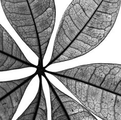 Trendy Flowers Drawing Black And White Negative Space Ideas Negative Space Photography, Abstract Photography, Macro Photography, Photography Composition, Shadow Photography, Photography Basics, Floral Photography, Elements And Principles, Elements Of Nature