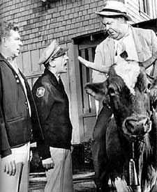 Andy and Barney berate town drunk Otis Campbell for riding a cow.