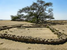 Tree of Life with recently uncovered ruins