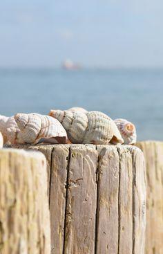 found shells