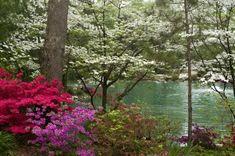 Azalea Path Arboretum and Botanical Gardens in Hazelton