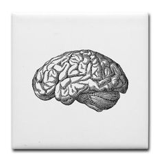 Brain tattoo illustration