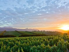 Waterkloof Estate Winery - South Africa They use all horse plowing and are completely biodynamic! South African Wine, Somerset West, Africa Travel, Countryside, Vineyard, Tourism, Scenery, Places To Visit, Around The Worlds