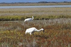 Rockport - a great weekend adventure especially with wintering whooping cranes!