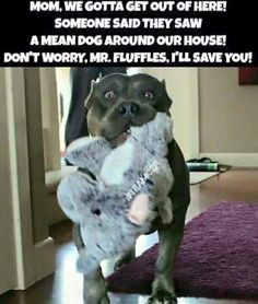 Pit Bulls and Itty Pitties | Oh no! Get to safety! ;-)