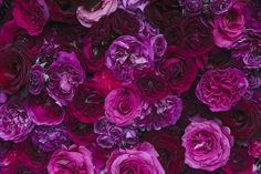 gambar purple, roses, and flowers Flower Phone Wallpaper, Flower Wallpaper, Iphone Wallpaper, Flowers Nature, Pretty Flowers, Spring Flowers, Flower Aesthetic, Arte Floral, Flower Backgrounds