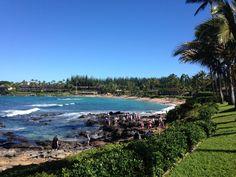 Hulaland Beach Blog, Hawaiian Green Sea Turtles at Napili Bay Beach