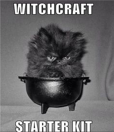 witchcraft You do use a cauldron, but not the kitten. Witchcraft is like magic.  This kitten is so cute and not evil. Lucky kitten too. Incensewoman