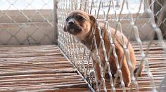 Hunde- und Katzenfleischhandel in China