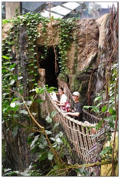 Walk on this rope bridge and visit a rainforest in of all places, Omaha Nebraska at the largest zoo in the world