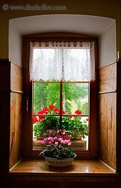 Window with flowers Cottage Windows, Windows And Doors, Looking Out The Window, Through The Looking Glass, Window Dressings, Window View, Through The Window, Window Boxes, Flower Boxes