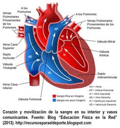 of the Heart: Blood flow through the Heart and the Heart Valves involved. Anatomy of the Heart: Blood flow through the Heart and the Heart Valves involved.Anatomy of the Heart: Blood flow through the Heart and the Heart Valves involved.