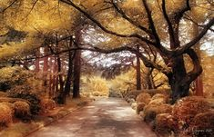 Shinjuku Gyoen Garden by Pajunen.deviantart.com on @deviantART