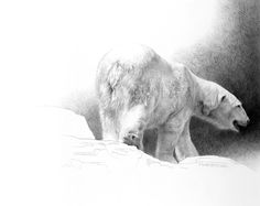 The Art of Dustin Van Wechel is an online gallery showcasing the work of award-winning American artist, Dustin Van Wechel. Wildlife Paintings, Wildlife Art, Polar Bear Drawing, Polar Bear Illustration, Bear Art, Animal Drawings, Pencil Drawings, Drawing Sketches, Sketching