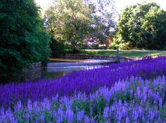 The 'Dream Park'in Enköping near Stockholm in Sweden:Piet Oudolf