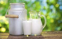 """Spesso mi viene chiesto come mai sono un forte promotore del latte crudo perchè """"pericoloso"""". Intanto giornali scientifici quali """"The American Journal of Immunology and Allergy"""" e """"The European Journal of Clinical Nutrition"""" pubblicano degli studi dove concludono che il latte pastorizzato promuove allergie alimentari e respiratorie mentre il latte crudo le riduce. #LatteCrudo #Allergie #IntolleranzeAlimentari"""