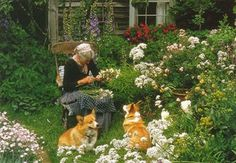 Tasha Tudor and her dogs among the dried flowers harvest-2