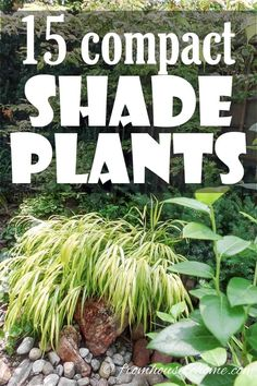 shade garden These shade loving perennial ground cover plants are AWESOME! So many pretty flowers that will look great in my backyard shade garden. Plants Under Trees, Tall Plants, Shade Plants, Backyard Shade, Shade Garden, Garden Plants, Flower Gardening, House Plants, Garden Shrubs
