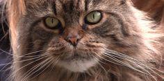 Chacun cherche (à comprendre) son chat