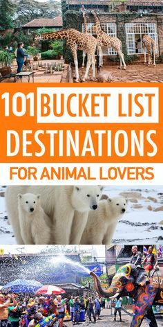 101 Bucket List Destinations For Animal Lovers. Dream Bucket list ideas and things to do before you die: comprehensive guide