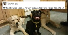 Literally Just A Bunch Of #Funny Tumblr Posts About #Dogs - they are just awesome: https://www.buzzfeed.com/katangus/hello-dog-hello-dog-hello-dog-hello-dog-hello-dog?utm_term=.efZYErGeG (via BuzzFeed)