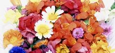 Been wanting to try different projects that use edible flowers, but wasn't sure where to get them.     40-50 edible flowers for $22.10