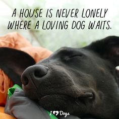 A house is never lonely where a loving dog waits. I Love Dogs, Cute Dogs, Funny Dogs, Dog Quotes Love, Pet Quotes Dog, Dog Lover Quotes, Dog Lovers, Dogs And Puppies, All Dogs